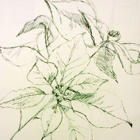 photo of pen and ink poinsettia drawing